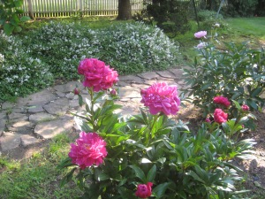 Peonies and ducks 003